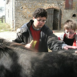 SEHA poney